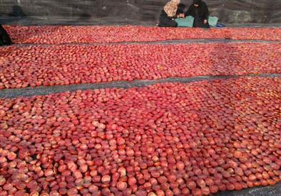 بدء موسم تجفيف الطماطم بالأقصر