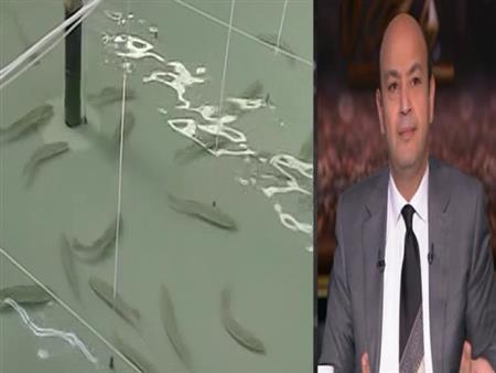 """عمرو أديب: """"السمك"""" سيصبح الوجبة القومية في مصر -فيديو"""
