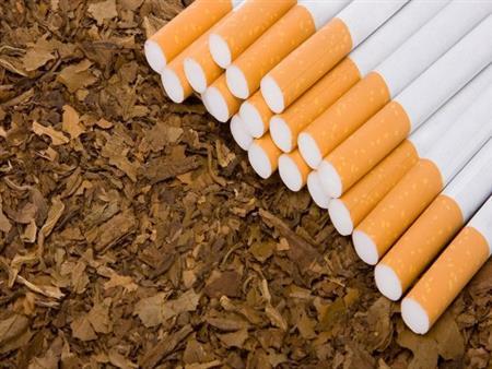 خبير زراعي يطالب القوات المسلحة بزراعة التبغ بدلاً من المانجا- فيديو