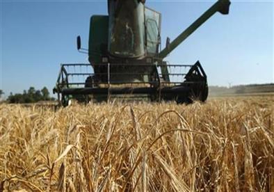 تخصيص 3 أيام لحصاد موسع للقمح بالمنوفية