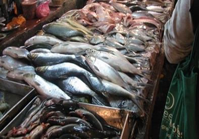 الزراعة: ضبط 5 أطنان ونصف من الدواجن والأسماك الفاسدة بالجيزة