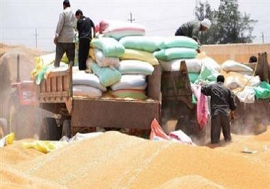 زيادة معدلات توريد القمح بعدد من المحافظات