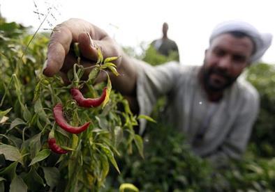 الدمرداش: إجراءات مشددة على تصدير الحاصلات الزراعية لمنع تكرار