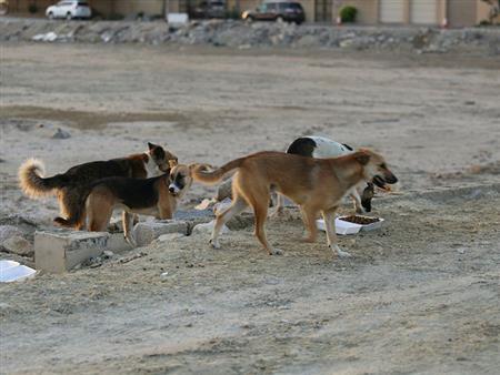 ما هو حكم قتل الكلاب الضالة بالسم؟