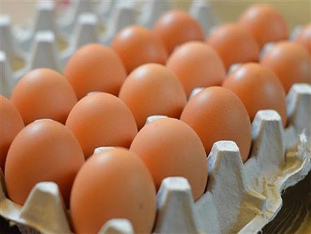 """بعد الاكتفاء الذاتي.. وزارة الزراعة تصدر """"البيض"""" إلى البحرين"""