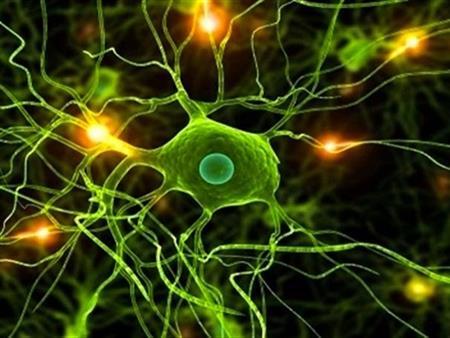 تطوير أول نموذج لأنسجة عصبية ثلاثي الأبعاد