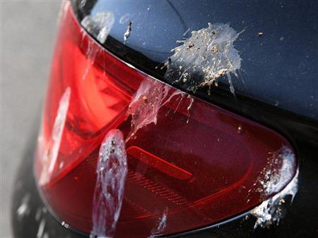 """أضرارها بالغة.. الطريقة الصحيحة لإزالة """"فضلات الطيور"""" عن السيارة (فيديو)"""