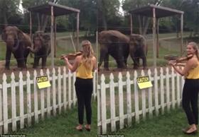 كيلي وفيولا ...فيلان يرقصان على أنغام الكمان