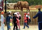 بالفيديو- فيل يقتل طفلة بحجر