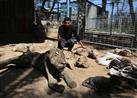 بالصور- أقفاص بدون حيوانات.. قصة أسوء حديقة في العالم