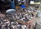 بسبب ارتفاع الأسعار.. حملات شعبية بكفر الشيخ لمقاطعة الأسماك (صور)