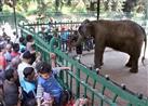 فتح حديقة حيوانات الجيزة بالمجان الجمعة المقبلة