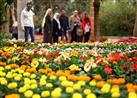 بالصور- بعد افتتاح معرضها.. زهور تعطيك طاقة إيجابية تعرف عليها