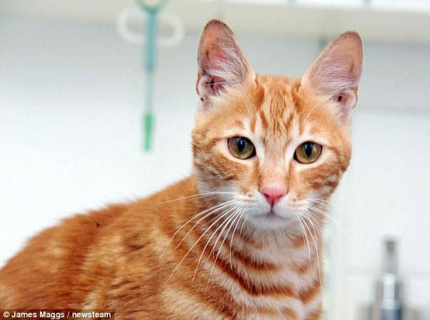 """القط المصري """"سندباد"""" ينجح في الوصول لبريطانيا بعد 17 يوم في البحر"""