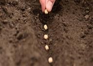 مستثمر هندي يضخ 50 مليون جنيه في زراعة البذور بمصر