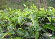 النباتات تمتلك نظاما يحميها من أشعة الشمس الحارقة