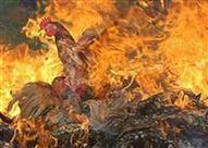 السيطرة على حريق بمزرعة دواجن في البحيرة