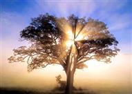 ما هي أشجار الآخرة الثلاثة التي ذكرها القرآن الكريم ؟!