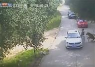 بالفيديو - نمر يلتهم سيدة في حديقة حيوانات مفتوحة في بكين