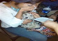 بالفيديو والصور.. قصة 20 يوما لإنقاذ كلب في الإسكندرية بمساعدة