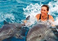 مشروع قانون أمريكي لمنع إزعاج الدلافين النائمة على شواطئ هاواي