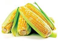 دراسة: ألياف الذرة تحمي المرأة من هشاشة العظام