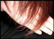 تقنية حديثة لتحليل البروتينات الموجودة في الشعر لتحديد مرتكب الجريمة