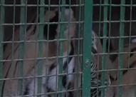 ننشر معاينة النيابة التصويرية لمزرعة الحيوانات المفترسة بالعياط