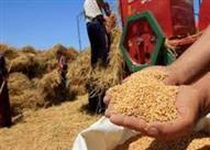نائب يطالب بسحب الثقة من وزير الزراعة بسبب قمح الإرجوت