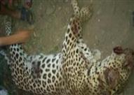 النيابة تقرر نقل الحيوانات المفترسة بمزرعة العياط لحديقة الحيوان بالجيزة