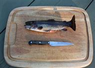 بالفيديو- هذه هي الطريق الأمثل لتنظيف السمك وتقطيعه