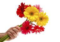 هل يصلح الورد كهدية في عيد الحب؟
