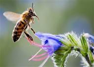 الشراب الذي يخرج من بطون النحل.. أسرار إلهية!