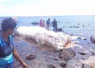 بالفيديو والصور - مخلوق بحري غريب يثير الذعر في الفلبين