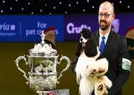 """""""ميامي"""" الأمريكي يفوز بأكبر مسابقة للكلاب المدللة في العالم"""