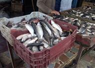 3 مطالب عاجلة لشعبة الأسماك من الحكومة للسيطرة على الأسعار قبل رمضان