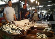 الأسعار تنهش أسماك السويس.. والتصدير يلتهم إنتاج المزارع (صور)
