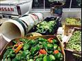 فواكه وخضروات غير صالحة للاستهلاك - ارشيفية