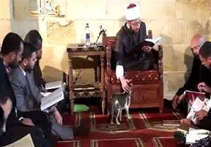الشيخ أسامة السيد الأزهري يرفق بالقطط