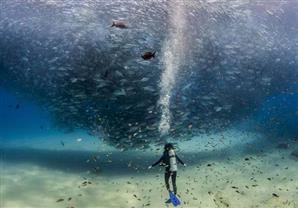 14 صورة مٌذهلة تم التقاطها في أعماق البحار