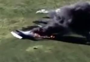 بالفيديو.. اللحظات الأولى لتحطم طائرة صغيرة في أمريكا