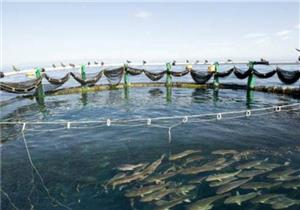 """الزراعة: نستهدف زيادة الإنتاج السمكي بـ""""البرلس"""" إلى 78 ألف طن سنويًا"""