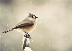 شاهد ماذا فعل رسول الله عندما اشتكى إليه الطائر؟!