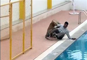 بالفيديو والصور.. نمر يهاجم مدرسة بالهند ويصيب ستة أشخاص.. في مشهد مرعب
