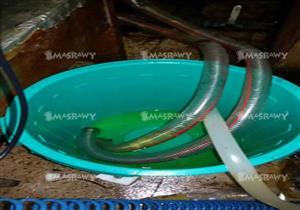ضبط مصنعين لإعادة تدوير زيت الطعام بالقناطر الخيرية