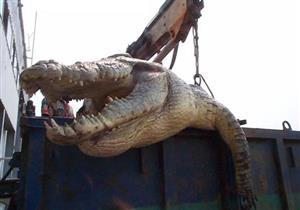 إصطياد أكبر تمساح في العالم يقترب حجمه من الديناصور - فيديو