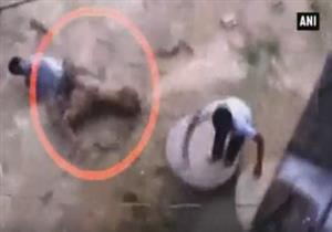 نمر يهاجم رجل في الهند