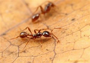 هل يجوز قتل النمل؟