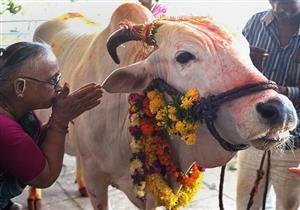 """الاعتداء على سيدة في الهند لحملها """"لحم البقر"""""""