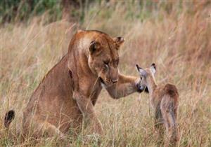 شاهد رحمة الله في حياة الحيوانات